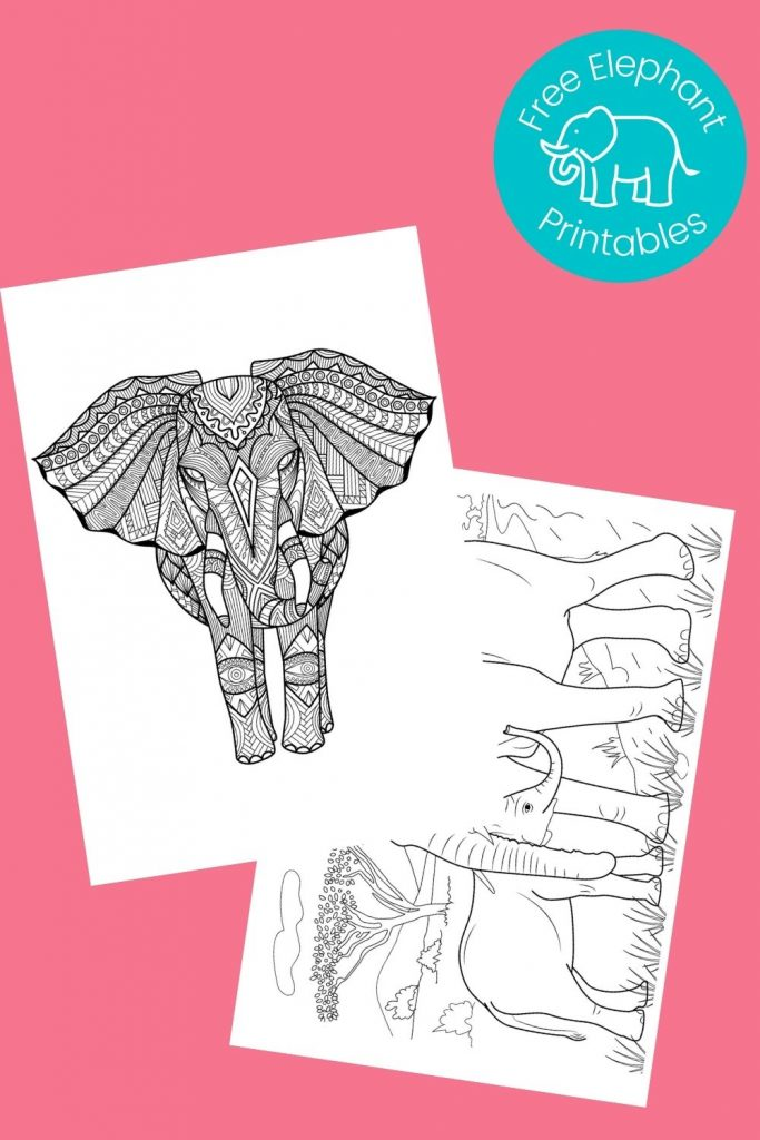Black and white elephant pictures to color on pink background