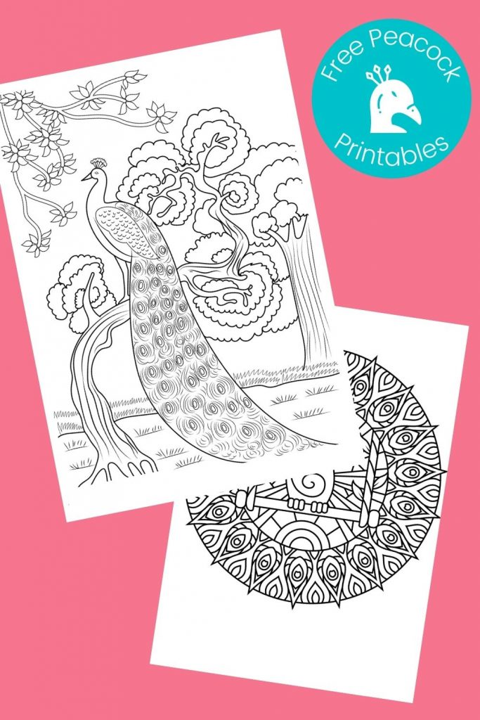 Printable peacock pictures on pink background
