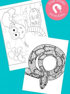 Snake coloring pages on aqua background