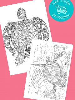 Turtle coloring pages - printed in black and white on pink background