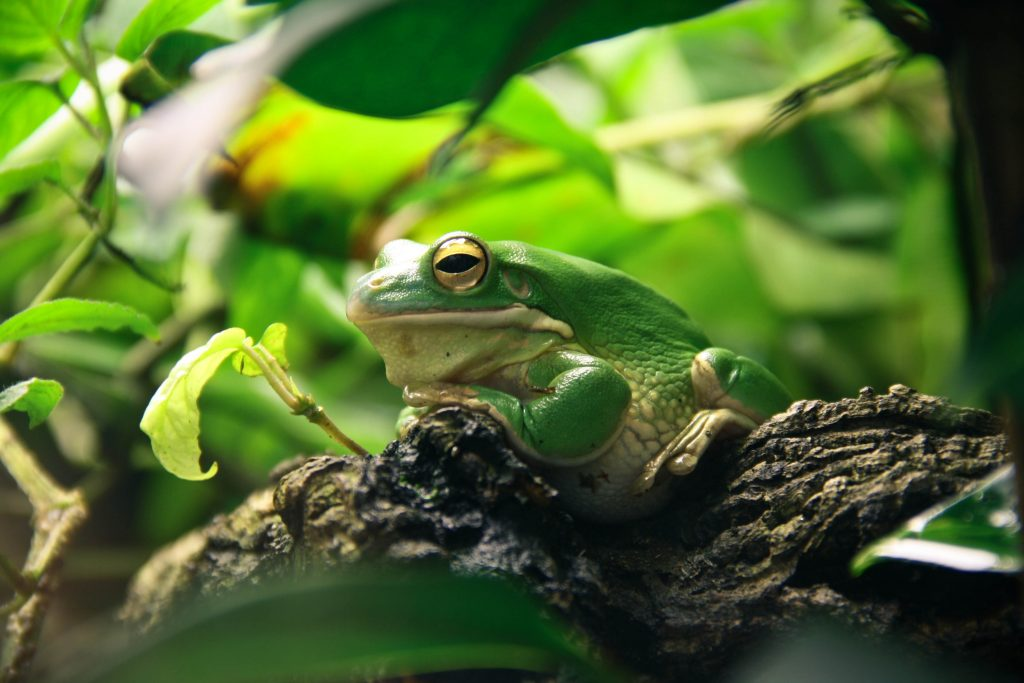 green tree frog sitting in tree in rainforest - frogs to color
