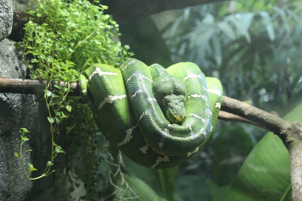 green snake on branch in rainforest