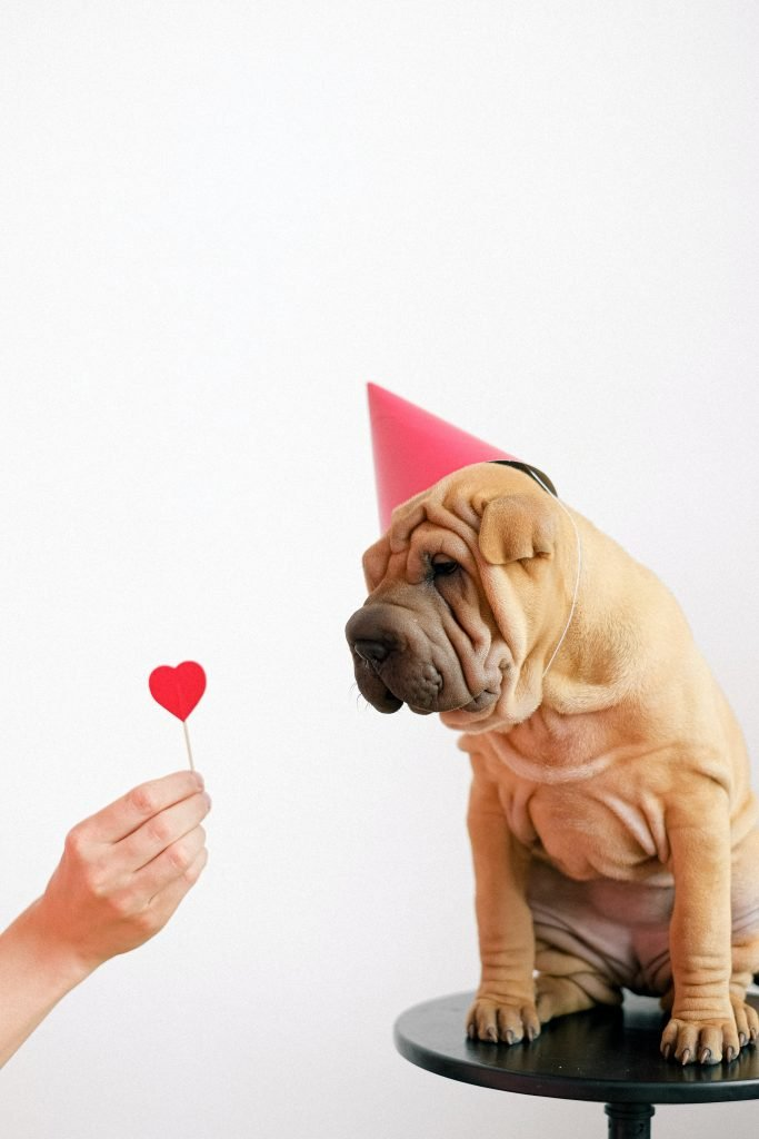 Shar pei dog wearing red party hat looking at hand holding heart lollipop