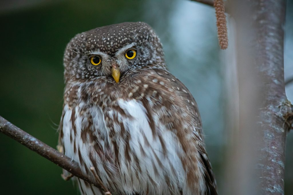 Brown and white owl sitting on tree branch - pictures of owls to color