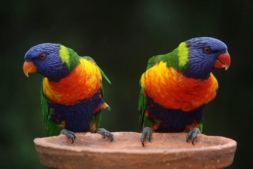 Colorful birds perched on bird bath