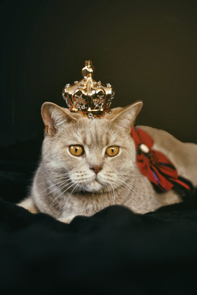 Tan cat wearing red bow and gold crown - cat coloring pages